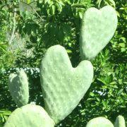 CactusHearts