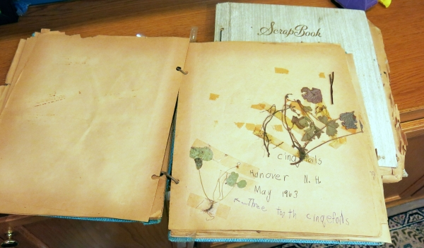 FlowerScrapbook2